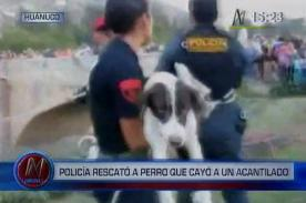 Inofensivo perro fue rescatado tras caer a acantilado - Video