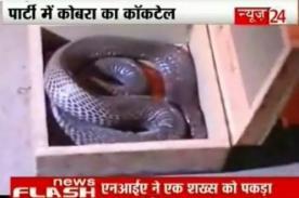 India: Veneno de cobra es usado como droga en los raves