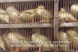 EEUU: Actriz ayuda a revelar la crueldad en la venta de plumas - VIDEO