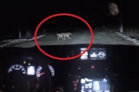 Video: Mujer atropella a can pero ocurre algo sorprendente