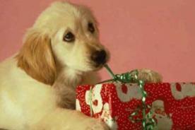 Navidad 2018: Regalos navideños para tu perro