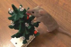 Tierno: Pequeño ratón 'enseña' a decorar árbol de Navidad - VIDEO