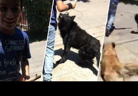 Buscó a su perro para ir a jugar al parque, pero otro se sumó al grupo