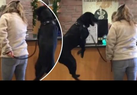 Perro demuestra su felicidad minutos antes de ingresar al consultorio de un veterinario