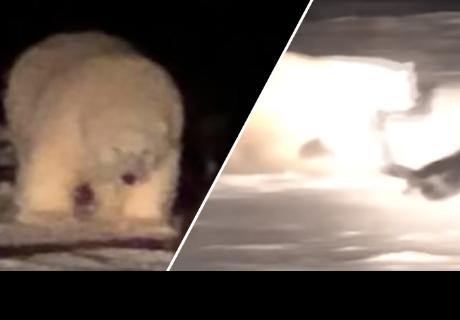 Perro y oso polar se pusieron a jugar cuando se conocieron por primera vez