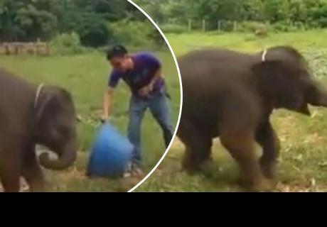 Elefante que se 'ríe' con su cuidador enamora cibernautas