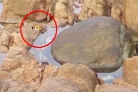YouTube: Cangrejito tiene fatal muerte al ser capturado por un pulpo [VIDEO]