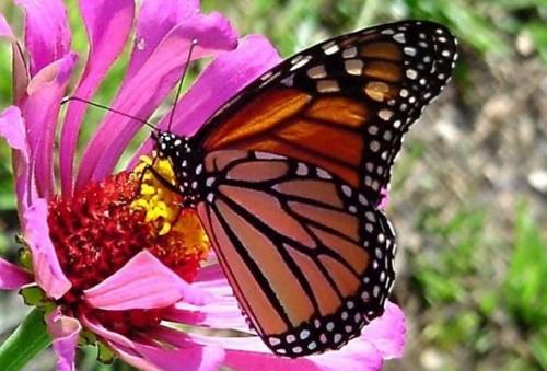Poesía a la Primavera: Bellos versos de Gabriela Mistral 'Doña Primavera'