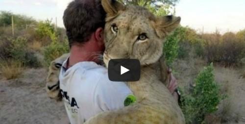 Video: La amistad entre una leona y dos ecologistas que salvaron su vida
