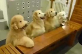 Video: Perros demuestran sus modales antes de almorzar