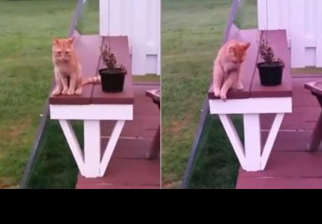 La peculiar forma de sentarse de este gato capta la atención de miles