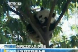 Imagen de panda asustado por el terremoto en China se vuelve viral