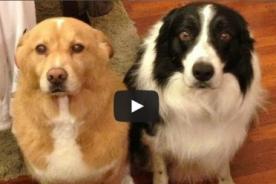 [Video] Las reacciones de perros cuando son regañados por sus dueños